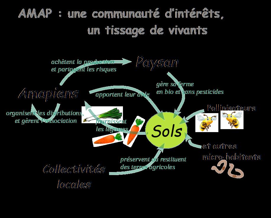 AMAP, une communauté d'intérêt